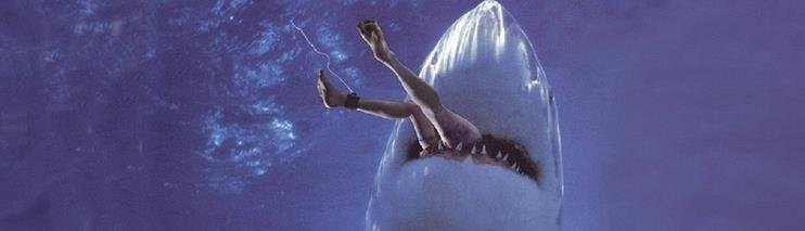 4 -- Malibu Shark Attack